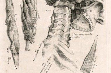 Er nakken farlig å knekke opp hos kiropraktor?