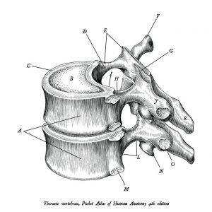 Brystryggsmerter