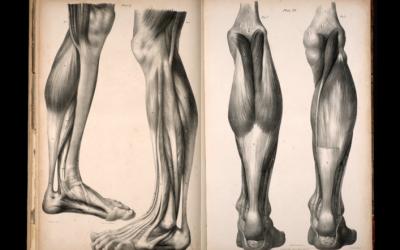 Smerter i akilles – hvordan behandle din akillessene