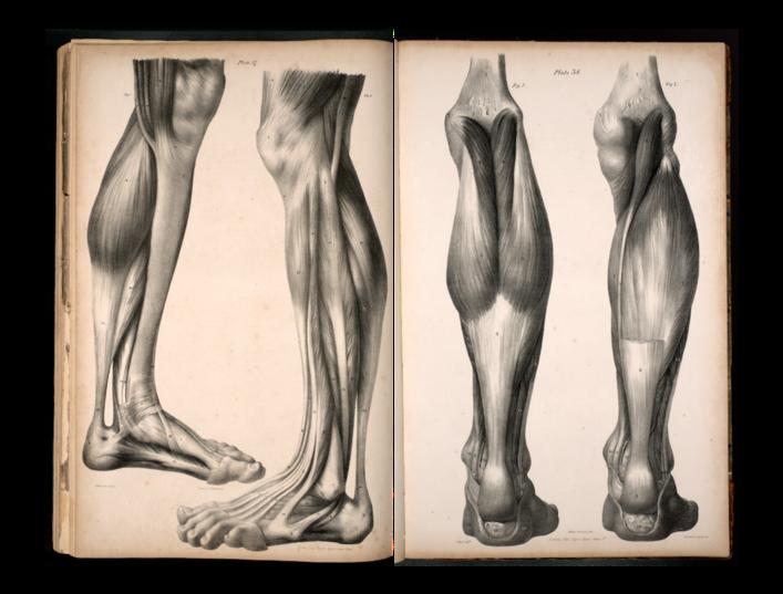 Akillestendinitt anatomisk bilde