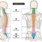 kiropraktikk og kiropraktor behandler ryggsøylen